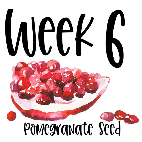 Baby size at week 6 pomegranate seed.