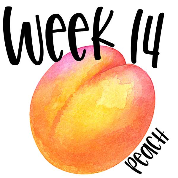 Baby size for week 14 compared to a peach.
