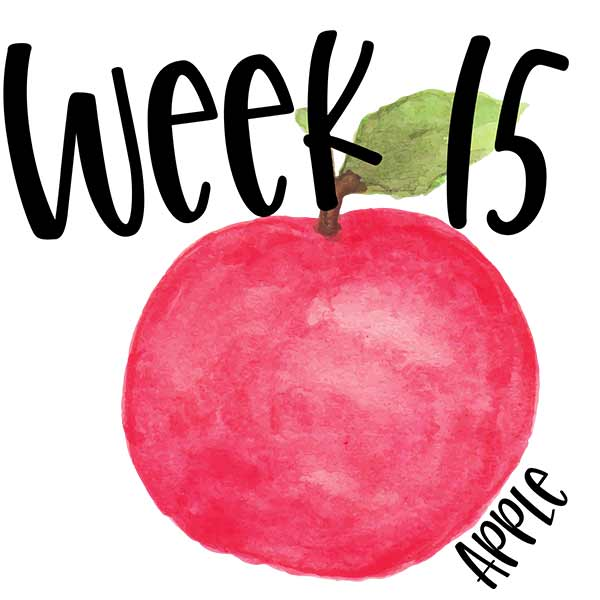Week 15 baby growth photo compared to an apple.