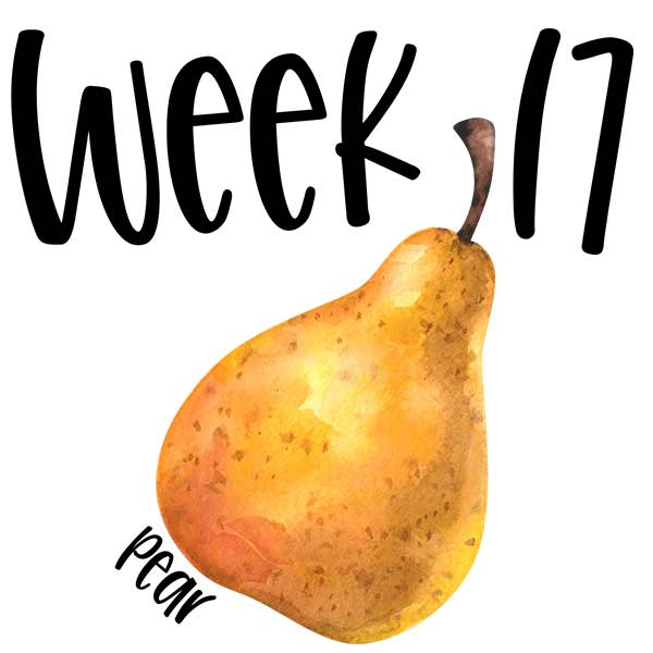 Baby size for week 17 compared to a pear.