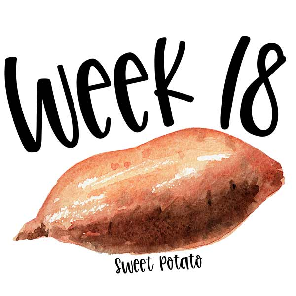 Watercolor illustration of a sweet potato for week 18 of baby growth in the womb.