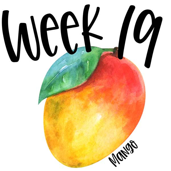 Watercolor illustration of a mango for week 19 baby size.