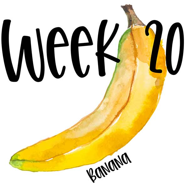 Week 20 with a watercolor banana for baby size comparison.