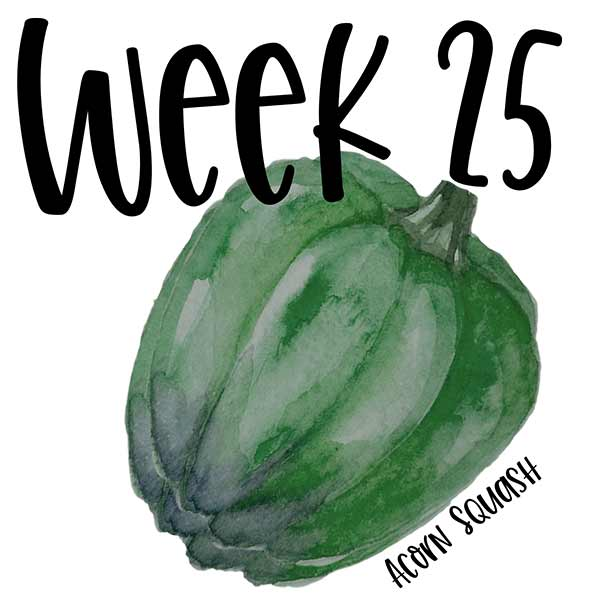 Week 25 of baby growth pictures compared to an acorn squash illustration