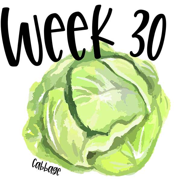 Baby size for week 30 compared to an illustration of a cabbage.