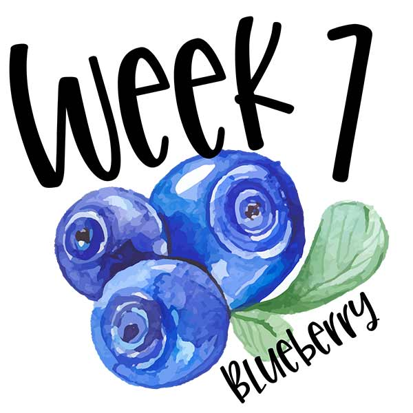 Baby growth chart compared to fruit for week 7 size of blueberries.
