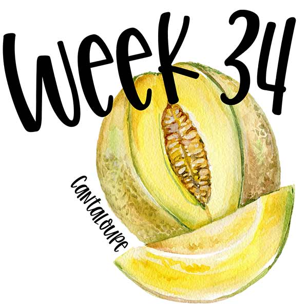 Week 34 and an illustrated cantaloupe.