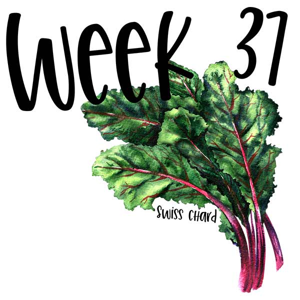Baby size for week 37 and a bunch of Swiss chard.