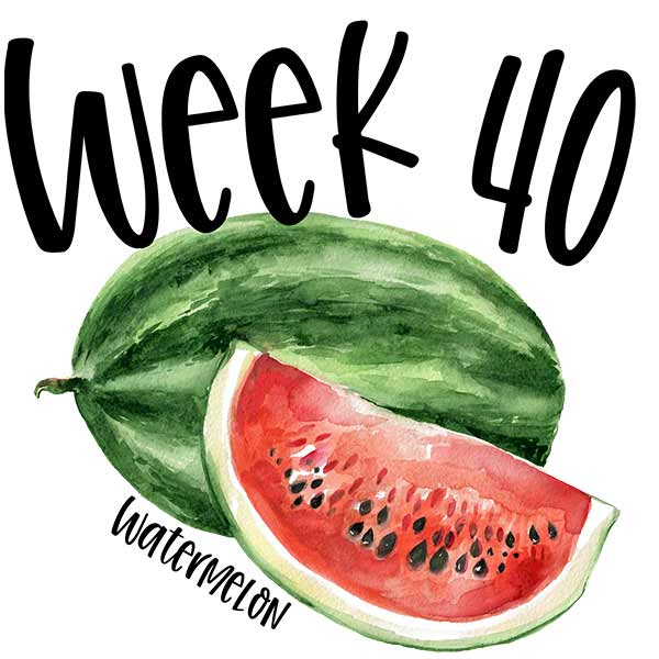 Baby size in the womb by week 40 compared to a watermelon.