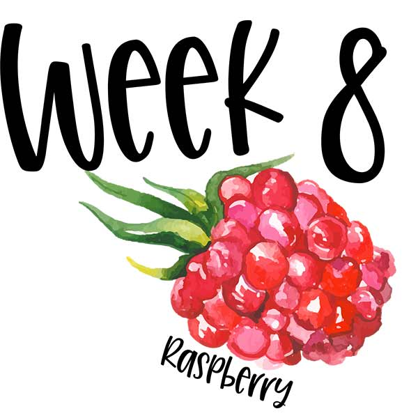 Baby size for week 8 compared to a raspberry.
