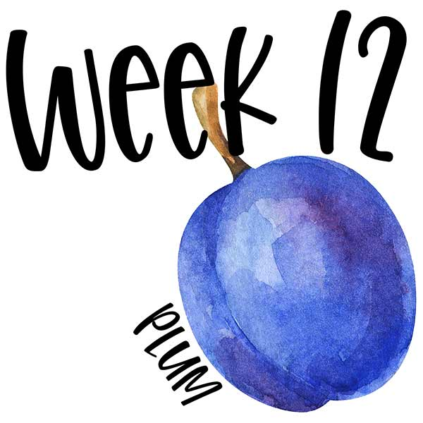 Baby size in the womb for week 12 compared to a plum.